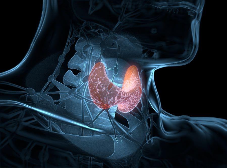 Υπερθυρεοειδισμός: Συμπτώματα - Διάγνωση - Θεραπεία